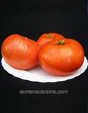 Семена томата Мирсини F1 (суппер продуктивный) 1000с