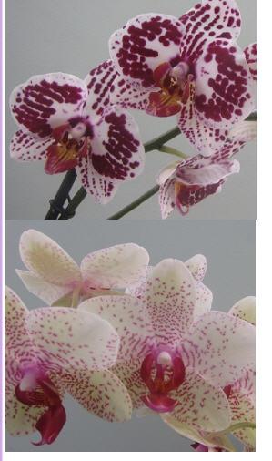 Склад магазин орхидей цветы комнатные