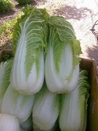Cabbage Beijing