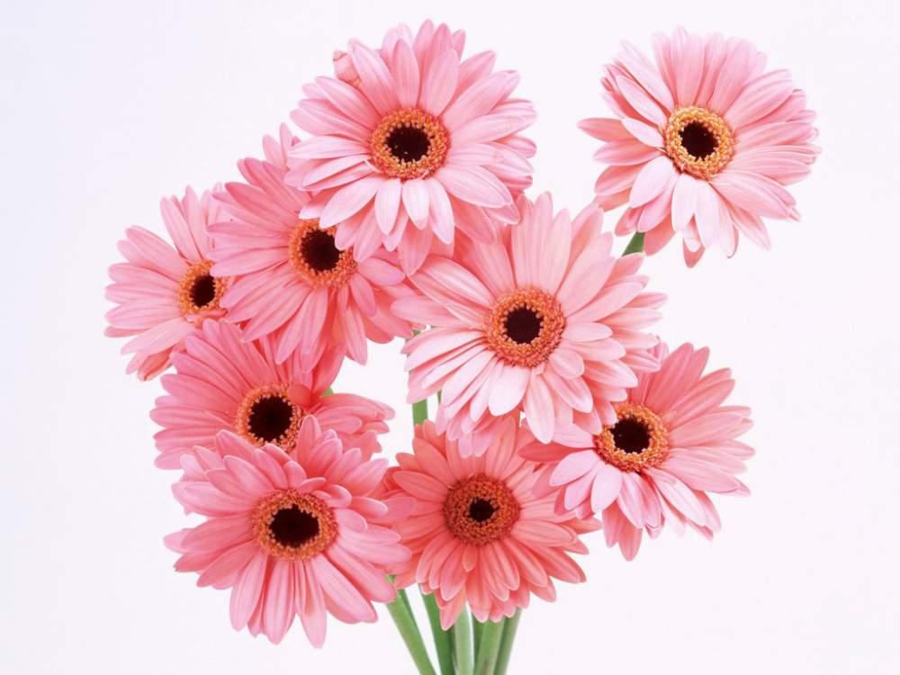 Квіти зрізані