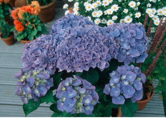 Цветы в горшках купить цветы в