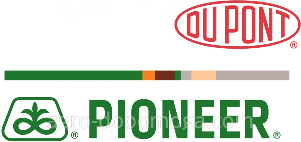 Семена подсолнуха и кукурузы Пионер (PIONEER, Піонер)