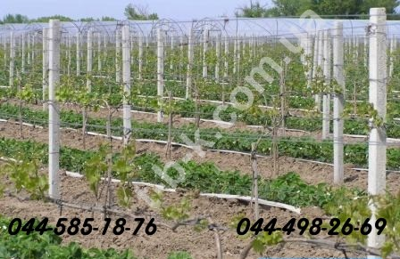 Grape columns and other reinforced concrete products