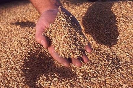 Купить Зерно , Зернобобовые, Кукуруза, Подсолнечник, Свекла, Корнеплоды кормовые, Силос, Сено, КРС, Свиньи, Молоко