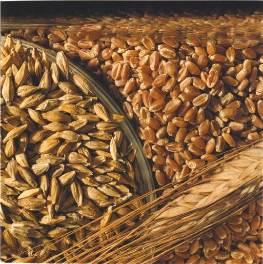 Пшеница 3 кл