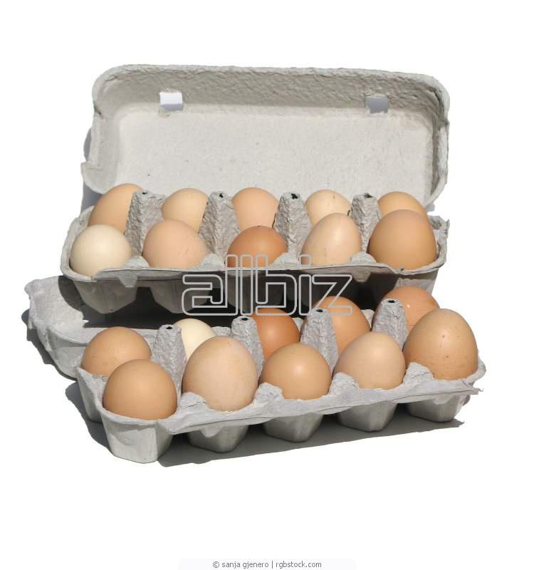 Купить Яйцо