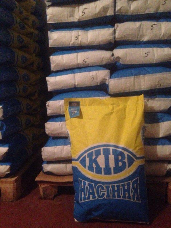 Купить Семена подсолнечника гибрид Лимит евролайтинг
