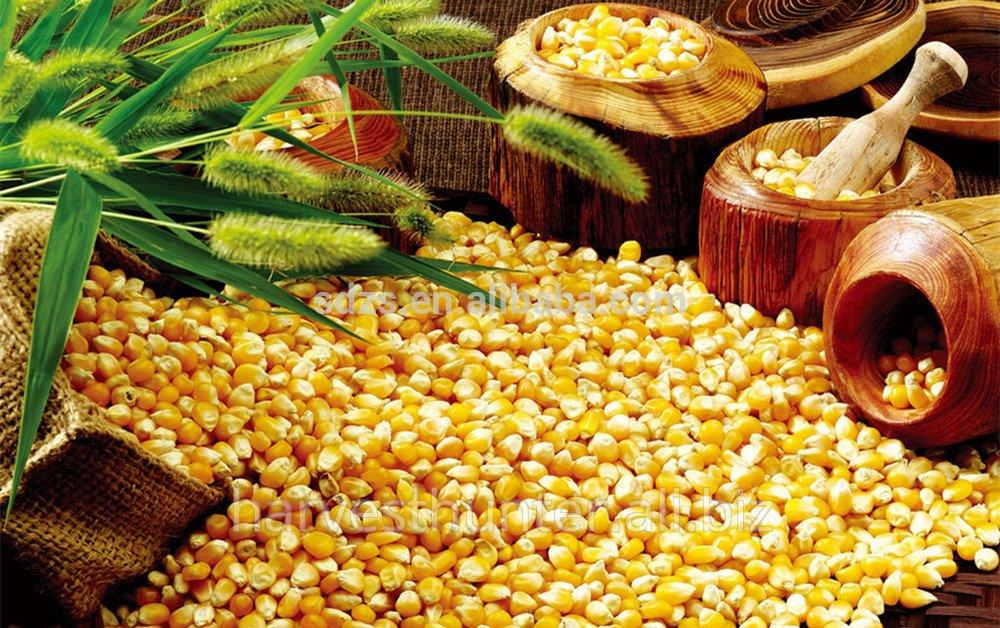 Купить Yellow Corn ; 30 000t; Ukrainian origin; $175 FOB Black sea