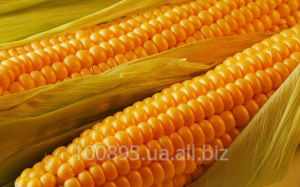Купити Кукурудза