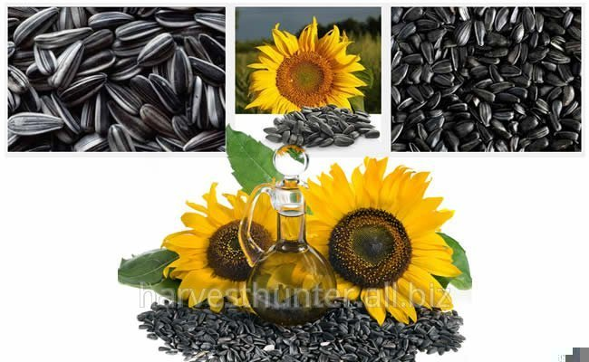 Sunflower Seeds, Moldavian origin. 3000t; $ 428 FOB Galats, Danube. ASAP.