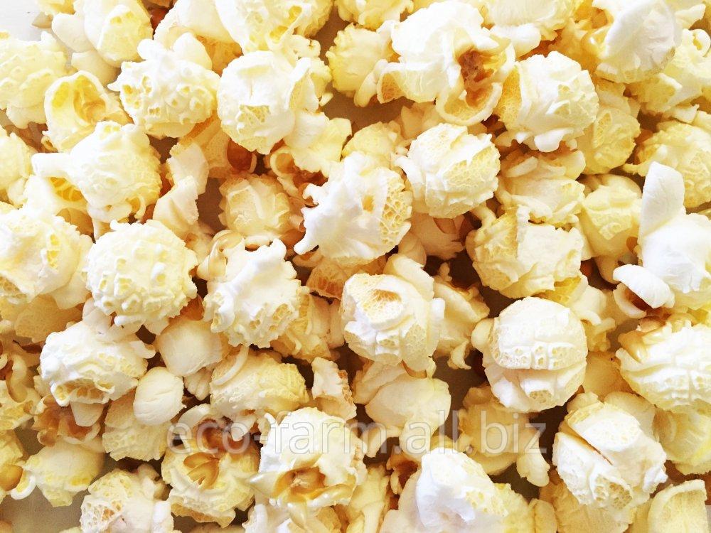 Купить Зерно кукурузы попкорн mushroom (зерно для попкорна)