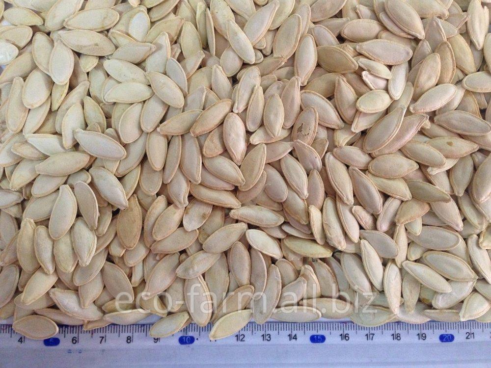 Купить Семечка тыквы болгарской (болгарка, булгар). Калибр 7,5 – 9,5 мм.