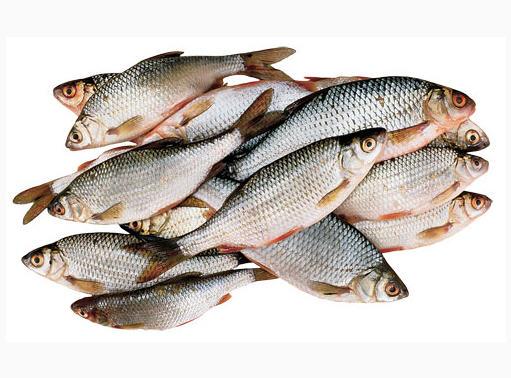 Купить Рыба речная разведение и реализация(купить, заказать оптом)