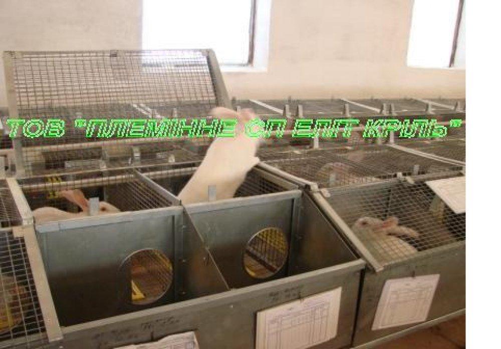 Клетки для откорма 1 этажные для кроликов, оборудование для выращивания кроликов