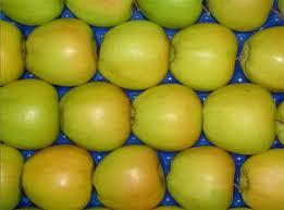 Купить Яблоки Голден Делишес, употребляются в свежем виде и хороши для переработки: соков, компотов, пастилы, мармеладов, чипсов