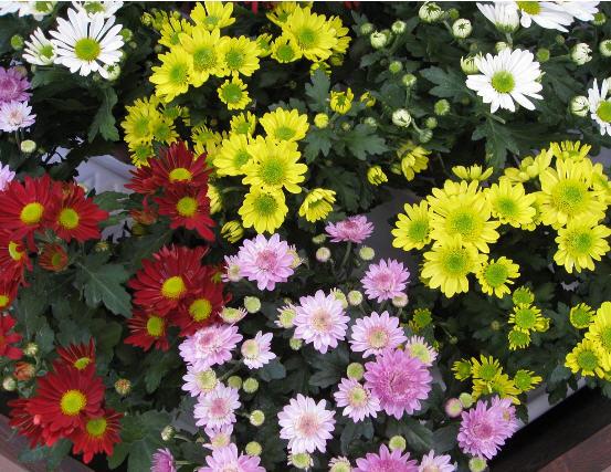 Цветы живые срезанные оптом голландия