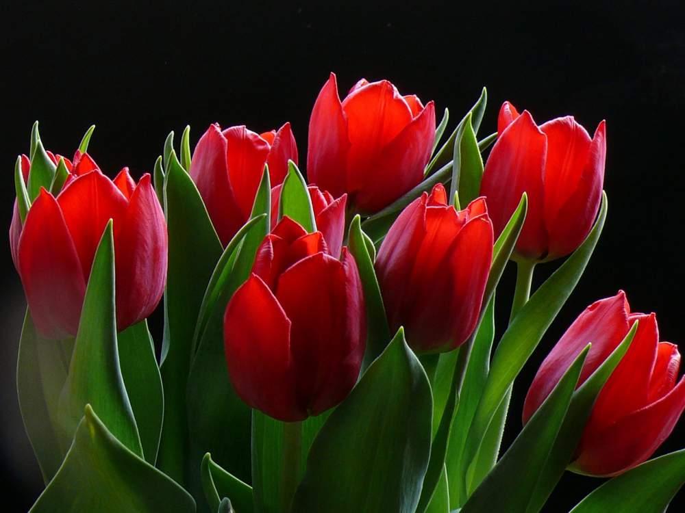 Цветы живые в широком ассортименте