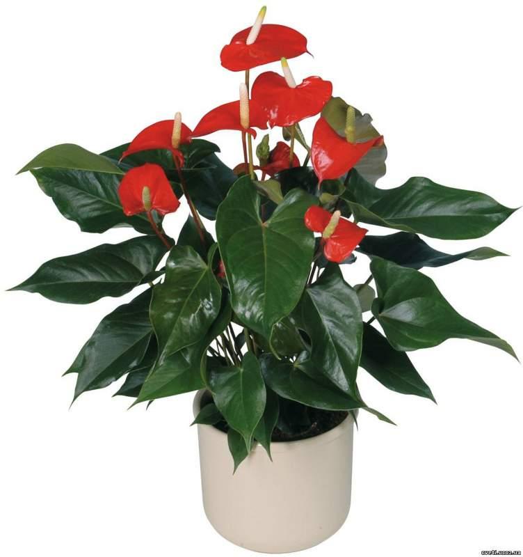 Живые цветы донецк купить оптом подарок жене на 9 лет совместной жизни