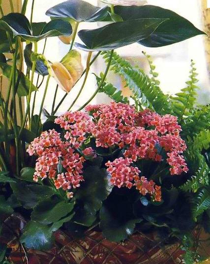 Цветы живые цветы срезанные цветы в