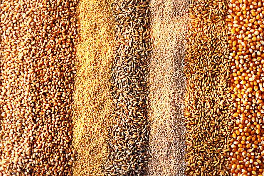Зерно не складывается: Минсельхозу предложат остановить закупочные интервенции