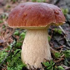 Купити Білі гриби
