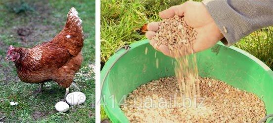 Комбикорм для кур несушек (гранулы)
