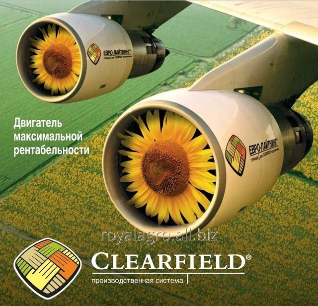 Семена подсолнечника Прими Евро-Лайтнинг Clearfield Нови Сад
