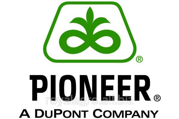 Семена кукурузы Пионер ПР39Т13, Pioneer PR39T13