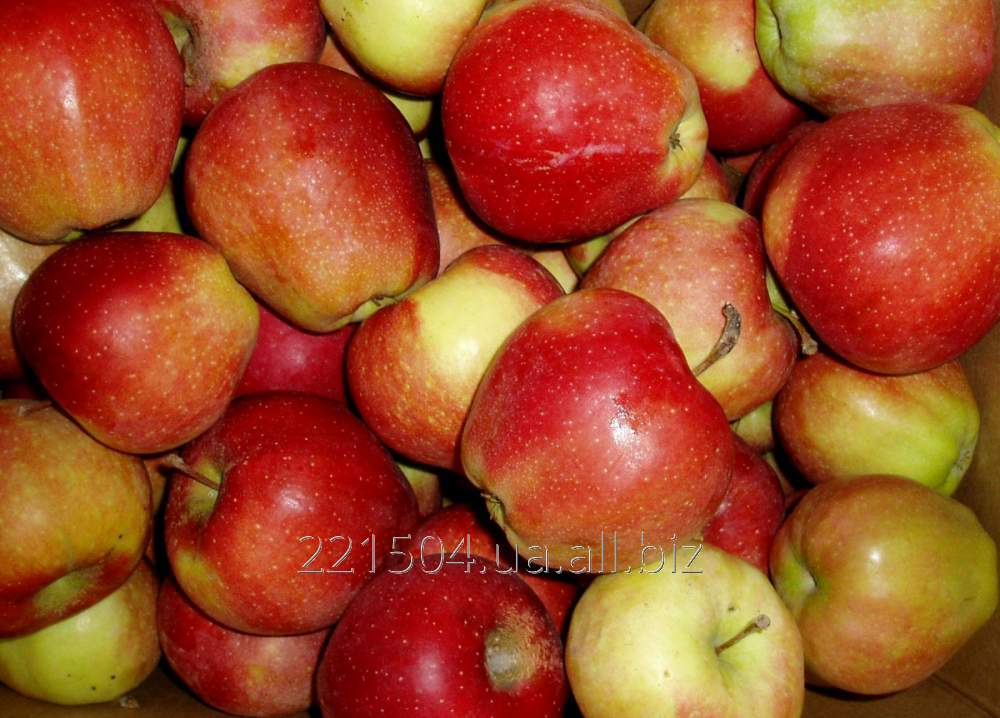 Купить Яблоки Джонаголд