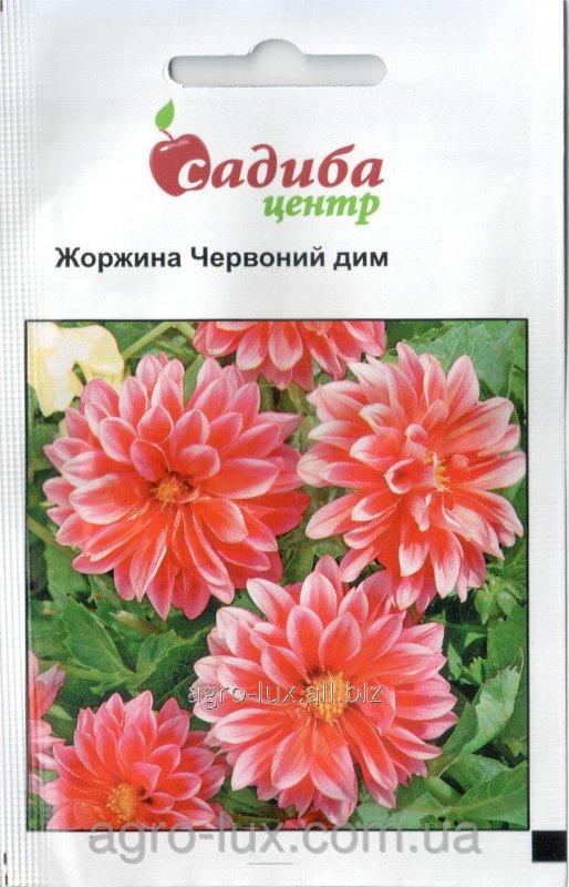 Купить Семена Георгины Красный дым 0,1 г