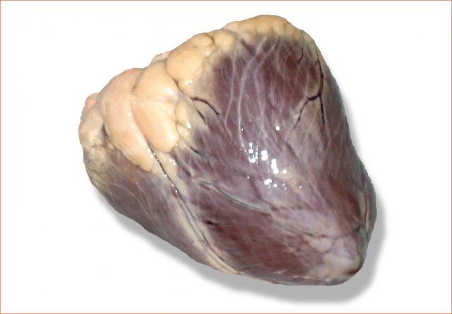 Купить Субпродукты говяжьи, сердце говяжье охлажденное 1 категории, субпродукты мясные охлажденные