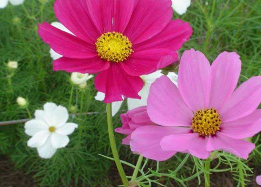 Купить цветы новоселки кухни нестандартных цветов под заказ