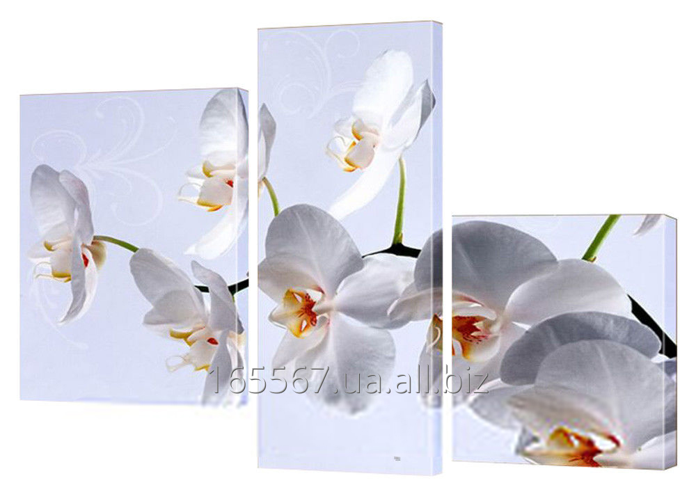 Buy Picture modular 176 Orchid white