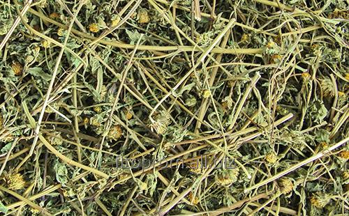 Череда трава