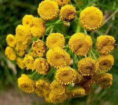 Buy Pizhma flowers