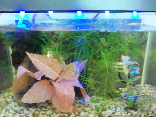 Купить Светильник на светодиодах для микро-аквариума в комплекте с адаптором.