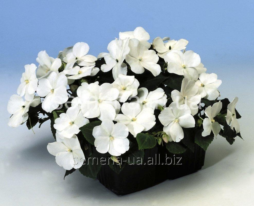 Семена цветов, Однолетник Бальзамин Баланс F1, Артикул УТ000000813