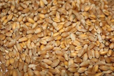 Купить Зерно фуражное