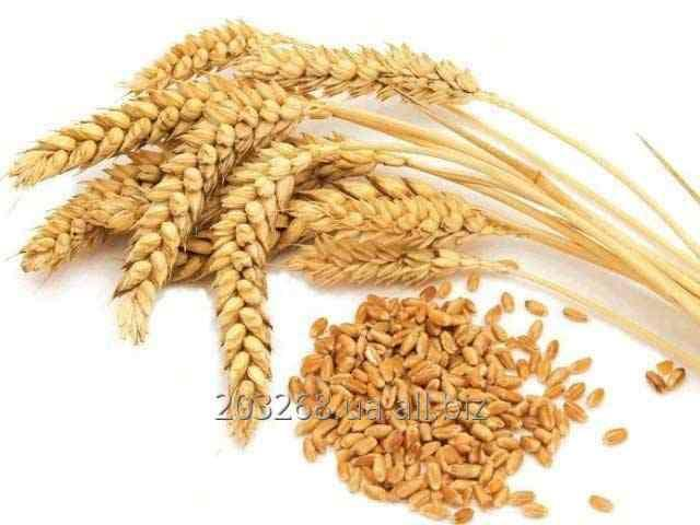 Пшеница продовольственная 1,2,3 класс