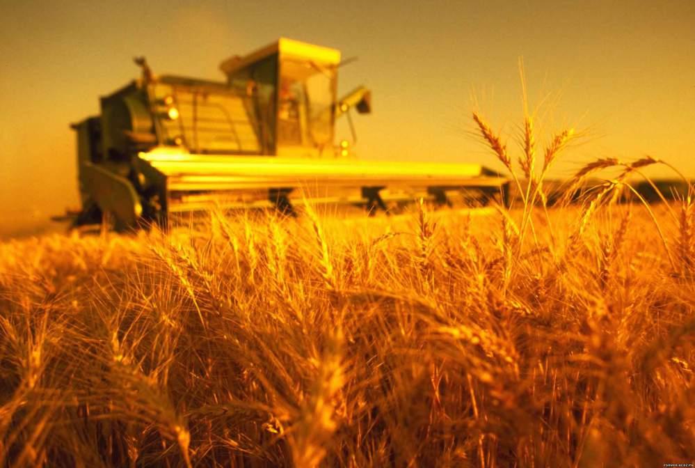 Купить Ячмень зерно