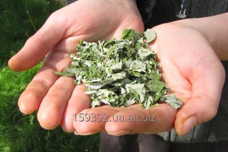 Купить Листья малины сушеные