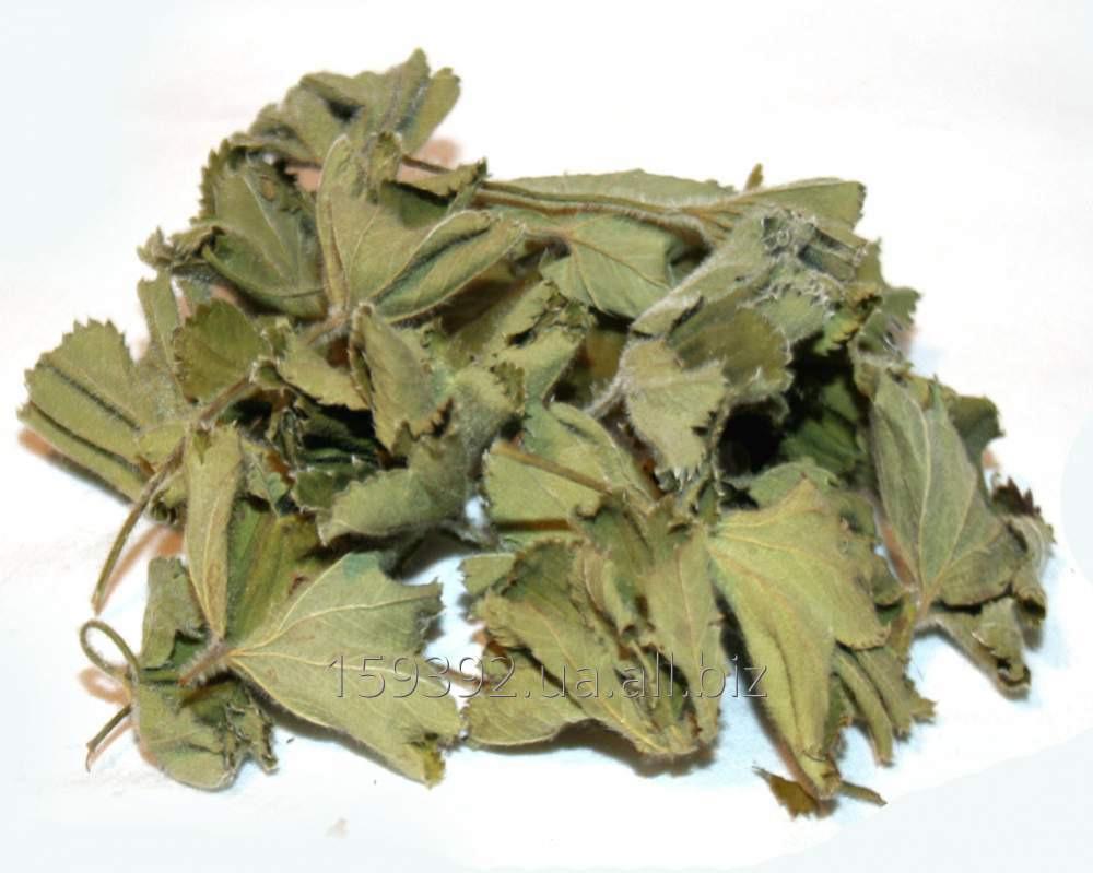 Малины лист сушеный