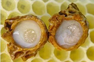 Маточное молочко. Прополис. Пчелиная пыльца. Пчелиный яд. Подмор (тело пчелы). Мед, продукты пчеловодства, мед майский, мед цветочный, мед акация, мед липа, мед гречка