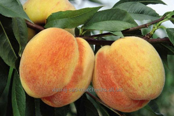 Peach Virgile