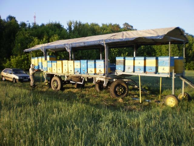 Пчелопавильон своим руками