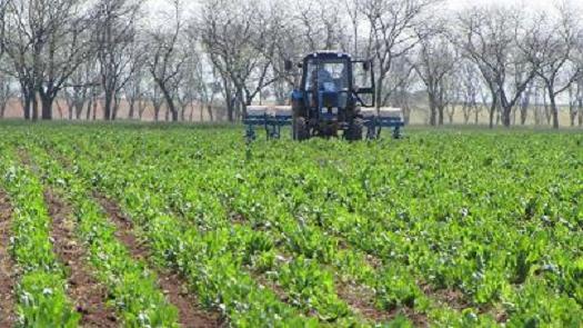 Buy Big to buy a plantain, in Ukraine