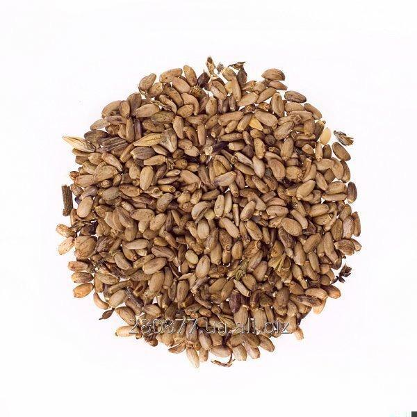 Buy Thistle seeds