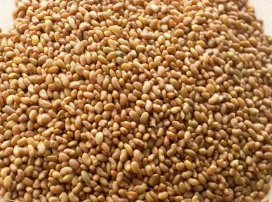 Семена люцерны (Партия от 100 кг)