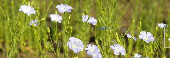 Средства защиты растений Презенс, Укравит, Баер, Сингента: препарат Осотин