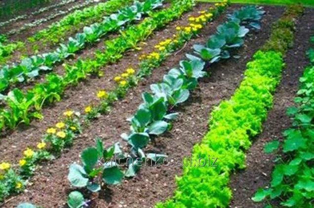 Средства защиты растений Презенс, Укравит, Баер, Сингента препарат Антибурьян